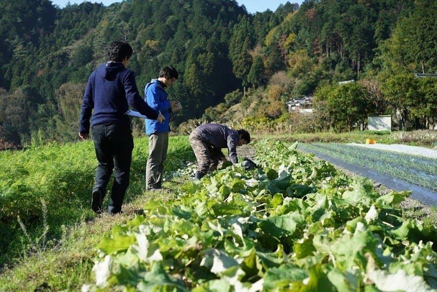 坂ノ途中との取引から新規就農者が学べること